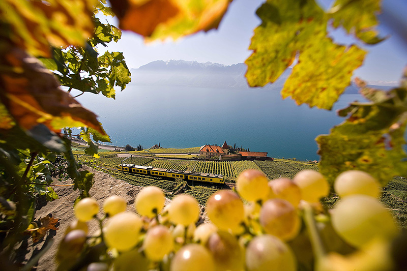 Lavaux-Wine-Terraces,-Switzerland-Tourism