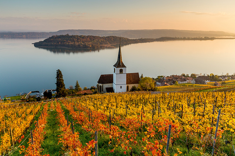Wine tasting at Swiss vineyards are a truly unique and exclusive experience