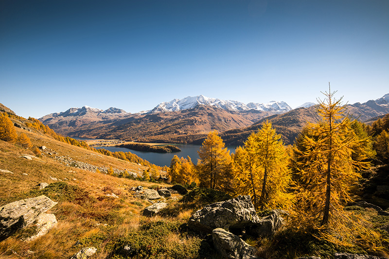 Autumn panorama above Lake Sils