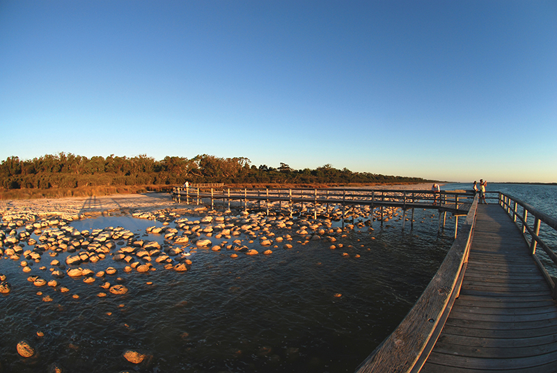 Lake Clifton thrombolites, Mandurah, Peel Region, Western Australia