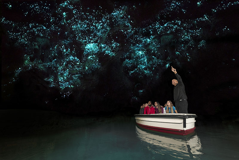Glowworms, Waitomo, New Zealand