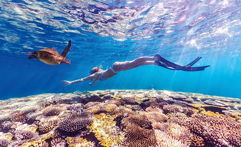 Snorkelling, Turtle, Ningaloo Marine Park, Western Australia