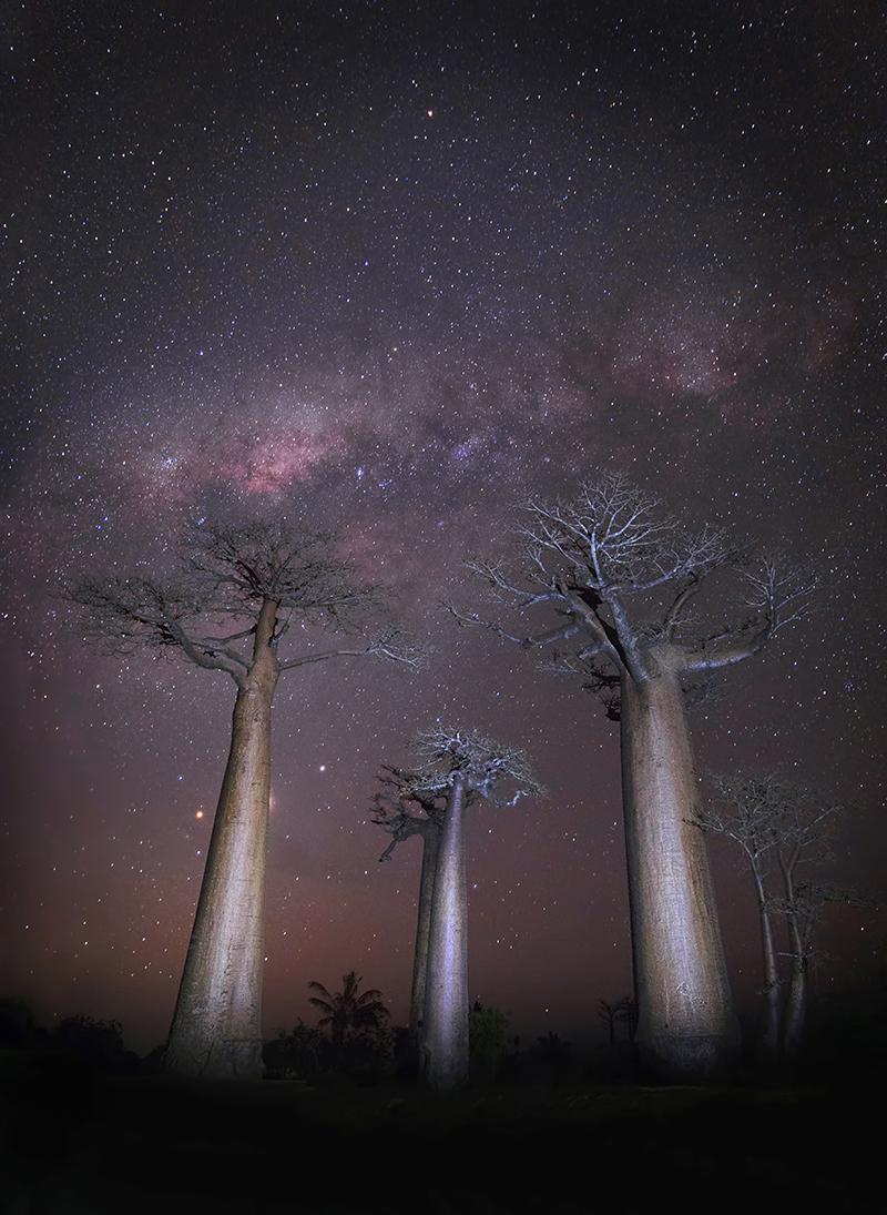 Baobabs, Menabe, Madagascar
