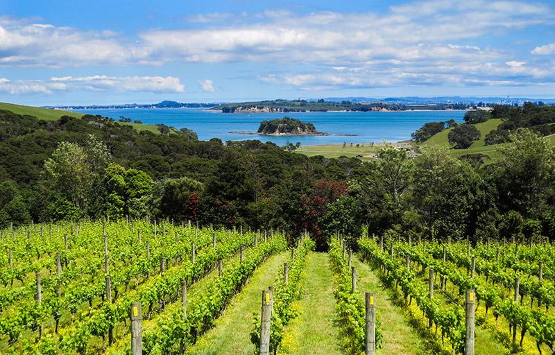 Ferry From Auckland Winery Waiheke Island