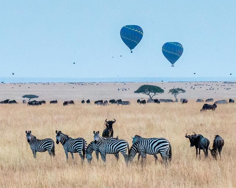 Great Migration, Maasai Mara, Kenya, Africa, hot air balloon