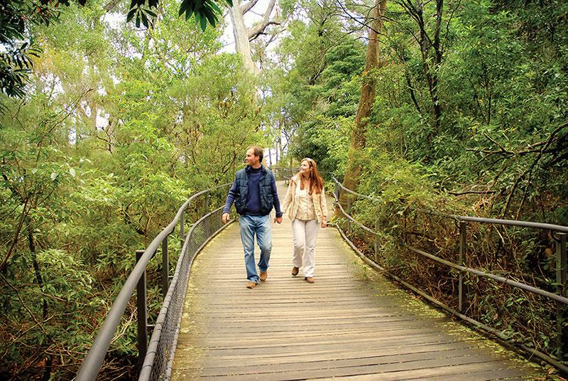 Fitzroy falls, chasing waterfalls in Sydney, Kiama, Kangaroo Valley